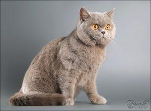ingrid-kates-akis
