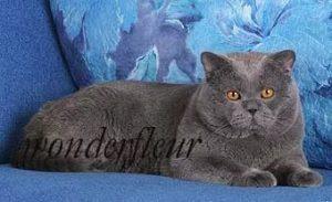Badyguard of Grain Wonderfleur